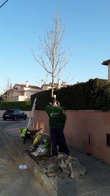 Plantació d'arbres nous